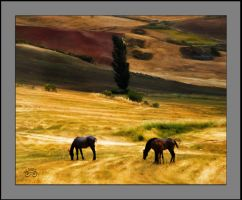Horses and landscape by photoman356