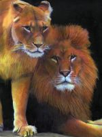 lions pride by hannah1796