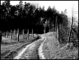 Road betwen vineyards by niwaj