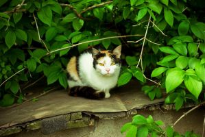 homeless cats 01 by rootkit0