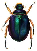 Colorful scarab beetle by wretchedharmony-lina