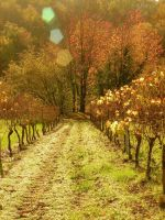Herbst V by Lamollesse