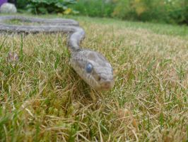 Storm's in the Grass by StormReptiles
