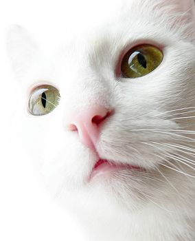 Cat Portrait - Once Again by ace-of-finland