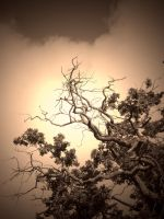 BRANCHING OUT ( SEPIA ) by ANDYBURGESS