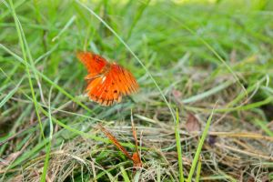 Butterfly Pair 5 by EJordanPhoto