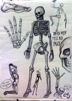 Skeleton Study by Red-Flare
