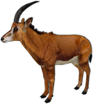 ZT2: Giant Sable Antelope Improved Female by GrandeChartreuse