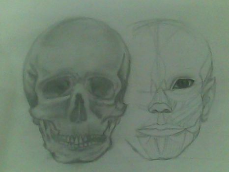 Second attempt to draw a human skull by Thikrayat