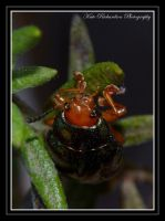 Bug 2 by DesignKReations