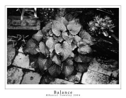 Balance by dtownley1