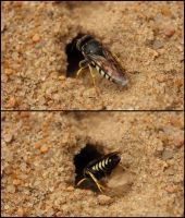 Immortalized Digger Wasp by RavenousDrake