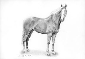 Blond horse by silima13