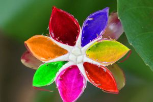 Colour plate flower by a6-k