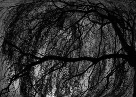 Wuthering tree by swiftach