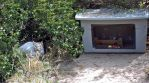 Cat in a homeless camp. by awesome43