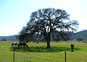 Three horse tree by Earthmagic