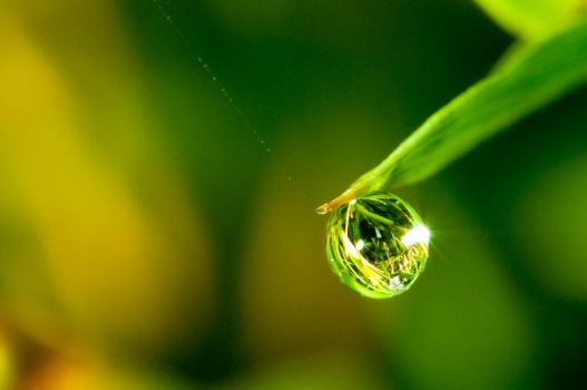 Droplet by jwpoon