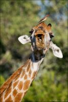 Giraffe and Bone by MrStickman