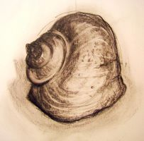Shell 1 by HanBO-Hobbit