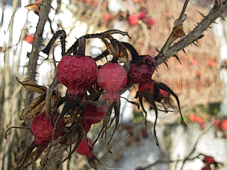 Rose Hips - Haws by Miounz