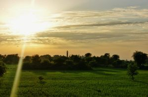 Fields of Pakistan by xcon89