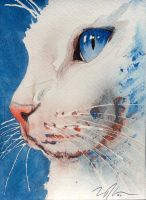 golly, another white cat... by GeocachingOdder