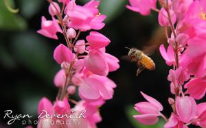 Bee - First shots with Canon 60D by RDography
