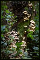 Tree Fungi by grimleyfiendish