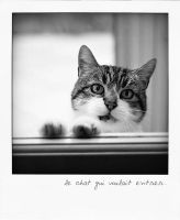 The cat which wanted to enter by ChristineAmat