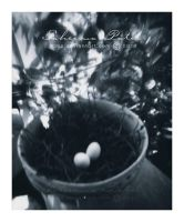 Pinhole Camera: Life by FaMz