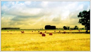 Rolling Hay by firefoxcentral