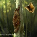Colugo by Nambroth
