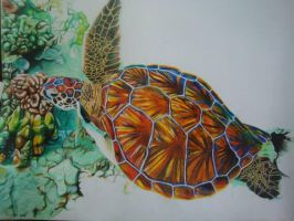 Crayon Turtle WIP by blueprince312