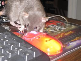The rats mouse by o0Psy0o