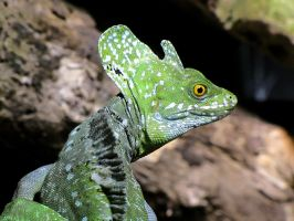 Lizard Look by Rourke-1
