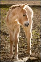 Little prancer by Wolfling01