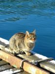 'sea' cat in Balaklava by Mari-Ghostly