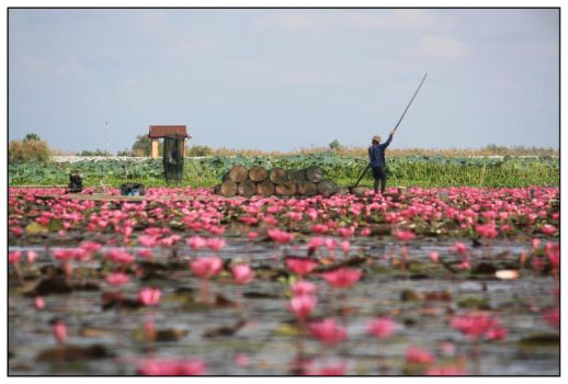 lotus forest No. 3 by areefeen