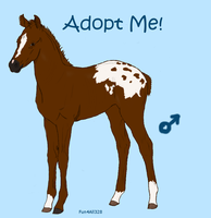 Foal Adoptable 2 by ReeseS8