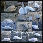 White Swan Package1 by Iardacil-stock