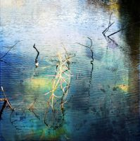 Twigs02 by horstdesign