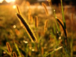 Grass in the Sun by Lairis77