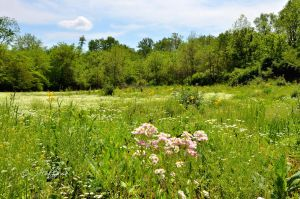 Meadow with Wild Asters by JamDebris