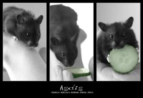 Cucumber hunt by iceline