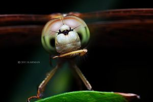 Dragonfly in action by karman87