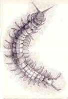 Giant Centipede by Creaseleave