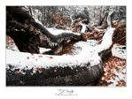 Epping Forest - Autumn-Winter by lemondog
