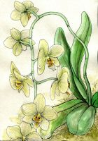 Orchid by Gawarin