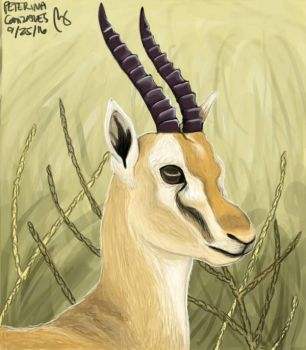 Gazelle by terin814